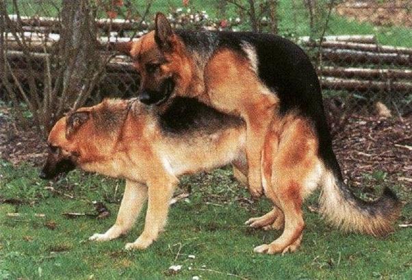German doggystyle