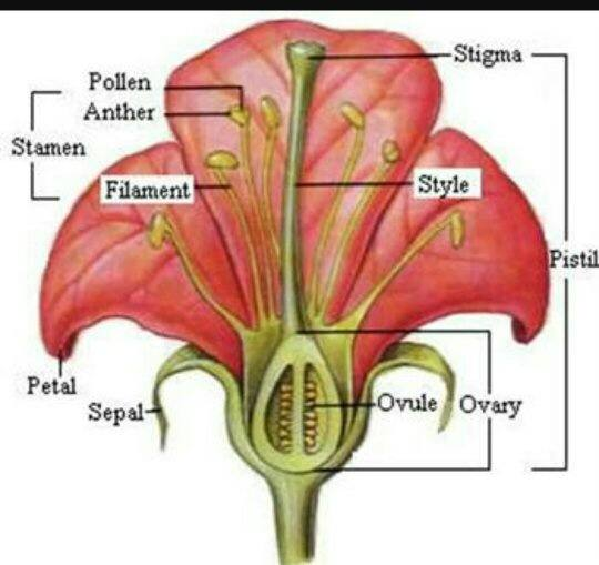 what is the center part of a flower called