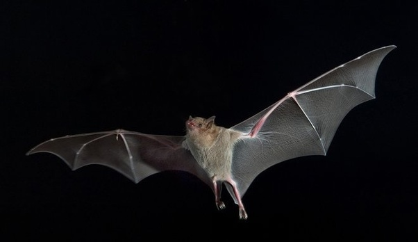 Do bats have eyes? Can they see? Why don't they use their ...