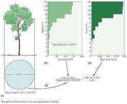 What Is Leaf Area Index Quora