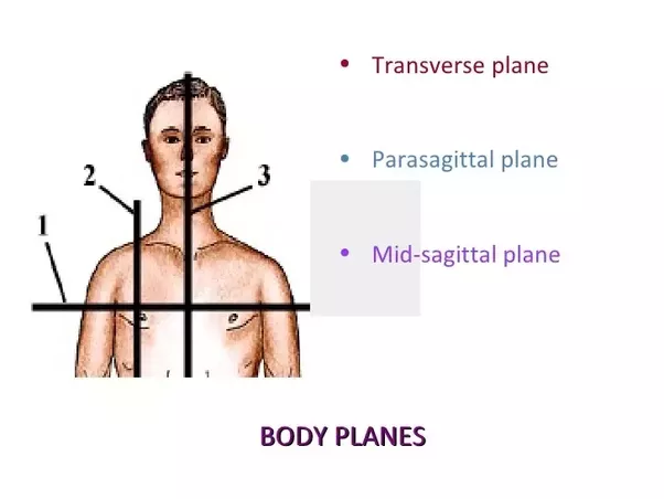 What Is A Parasagittal Plane Quora