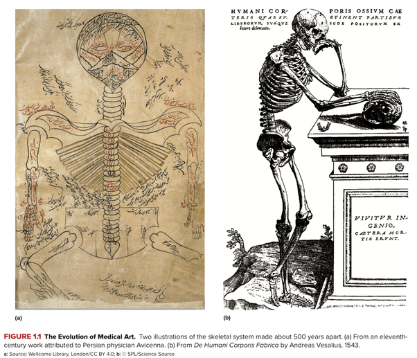 Who is the father of anatomy? - Quora