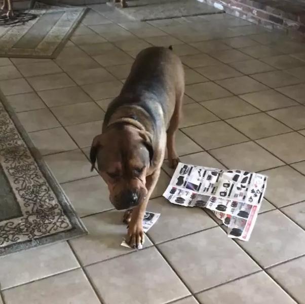 dog ate paper towel