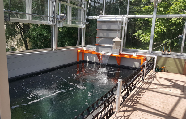 What is the best koi pond filter system quora for Koi pond filter