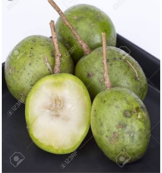What Is The Scientific Name Of A Hog Plum Quora