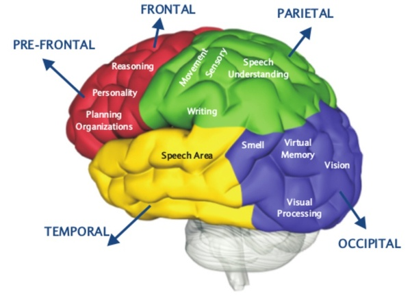 If all humans were born without the Amygdala part of the ...