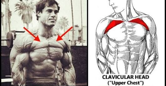 What is the best chest exercise for a nice, muscular chest? - Quora
