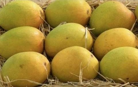 How to sell mangoes online - Quora