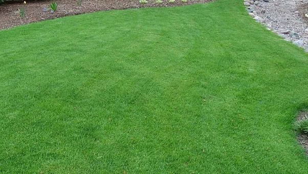 Merveilleux You Will Notice That It Looks Trim, And Uniform, But That Is A Little  Deceiving. Whether Placed As Sod, Or Planted As Seed, The U201cgrassu201d Is  Essentially A ...