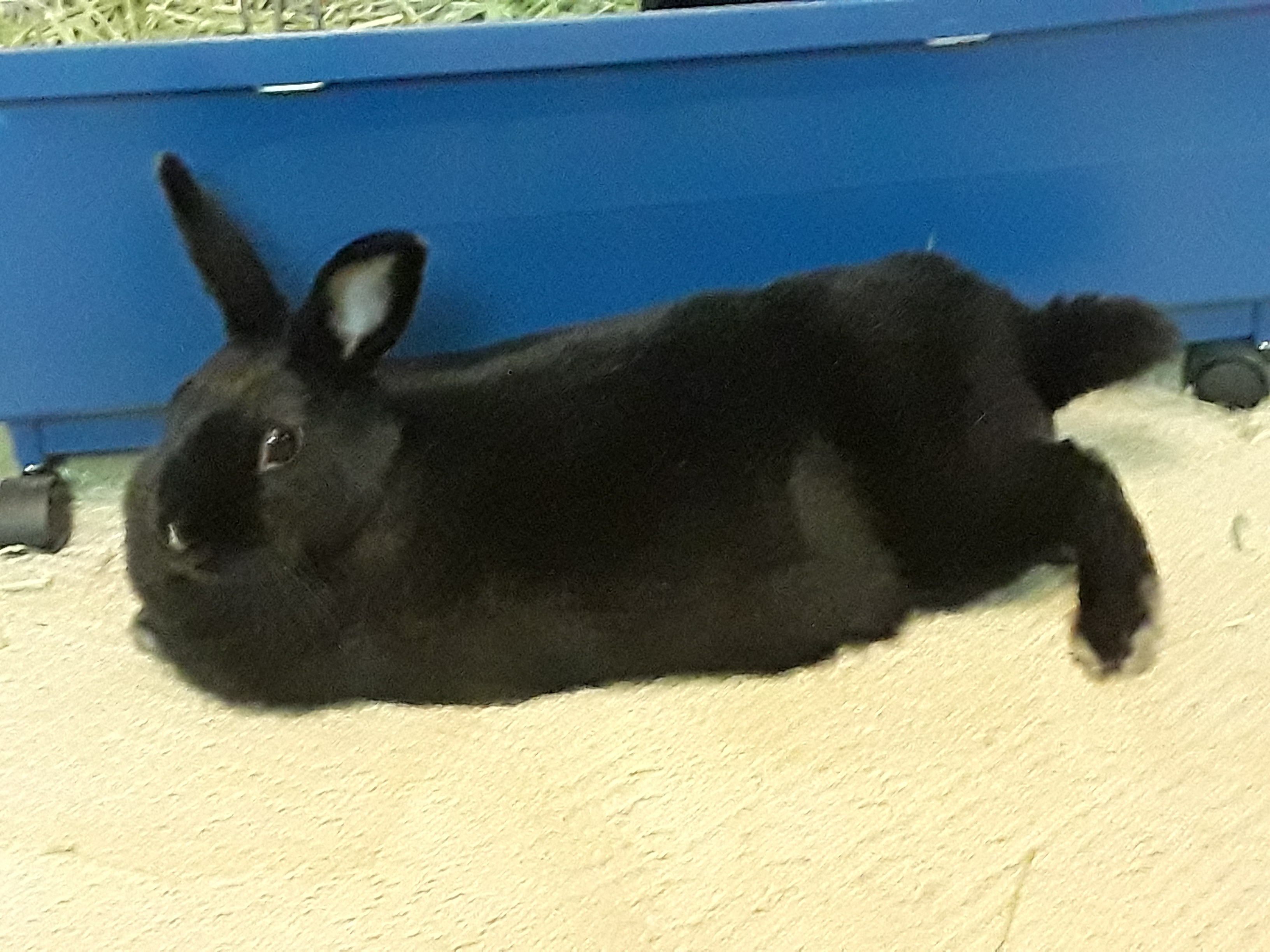 My rabbit has not eat anything for two days. What could be the ...