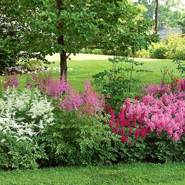 Which beautiful full bright colored flowers can I plant in ...