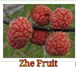 What fruits start with the letter Z? - Quora