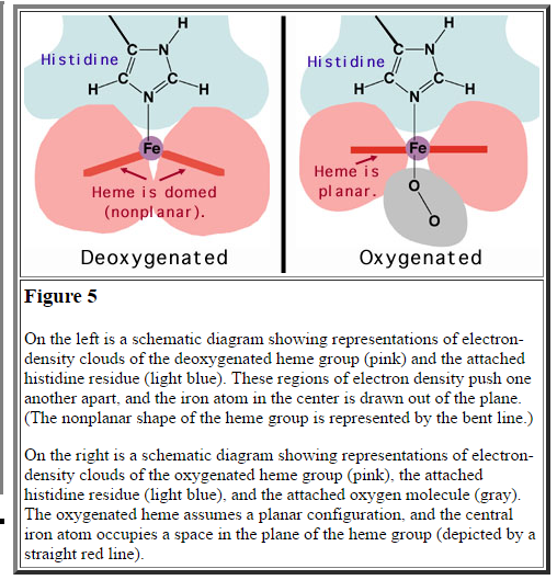 How Does Heme Bind Oxygen?