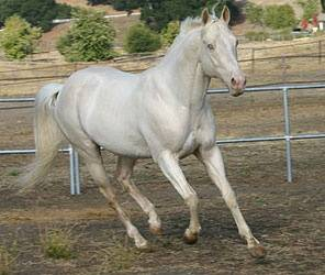 What Are The Different Types Of White Horses Quora