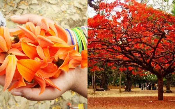 What do different flowers symbolize to different cultures ... Palash Flower In Hindi
