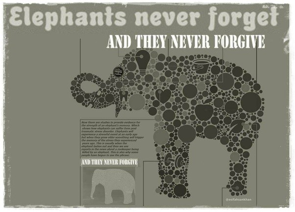 How Did The Adage That 'elephants Never Forget' Become