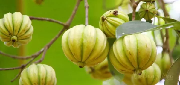 garcinia cambogia gyakori kérdések)