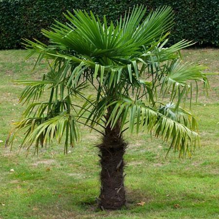 Palm Tree Grow