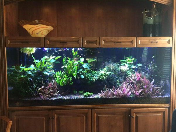 What are the dimensions of a 200 gallon fish tank? - Quora
