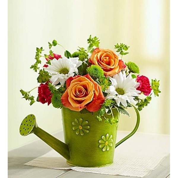 What are some good flowers to give to a friend? - Quora