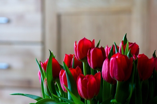 Which Flower Is Better Rose Or Tulip