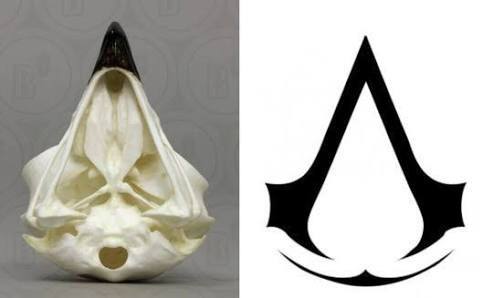 What Does The Assassin S Creed Logo Mean Quora