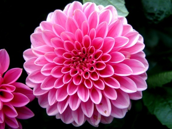 What is the purple and the white flower in ios 8 wallpaper quora answer wiki mightylinksfo
