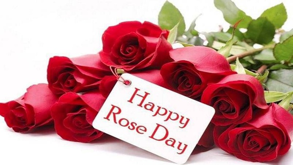 What Are The Best Quotes On Rose Day Quora