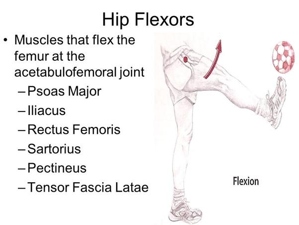 What are the best hip flexor exercises? - Quora