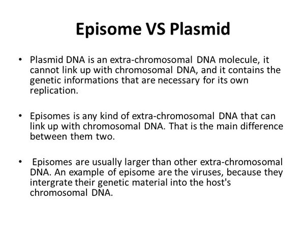 What Is An Episome Quora