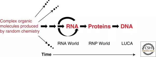 rna world theory