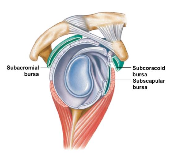 What is subcoracoid bursitis? - Quora