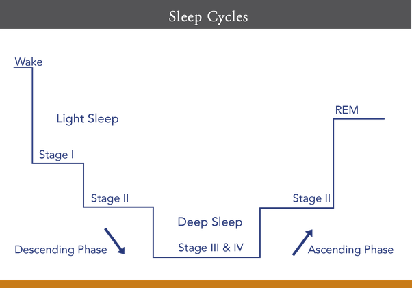 Whats Important In Your Typical Sleep Phases Is Both The Descending And Ascending Phase With 5 Hours Of Sleep Your Sleep Phases Will Adapt To Fit Into The