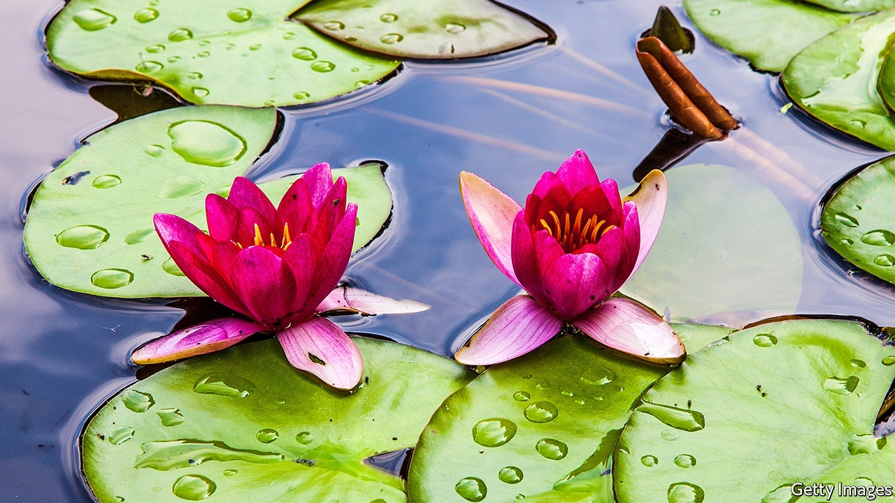 Our National Flower Lotus Choice Image Flower Wallpaper Hd