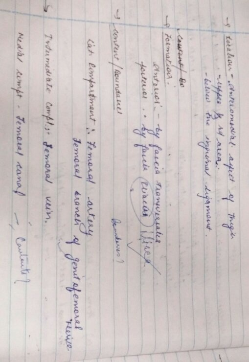 What do professors expect in a answer sheet of mbbs first year exam