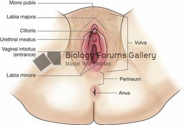 Womens vulva clitorus photos
