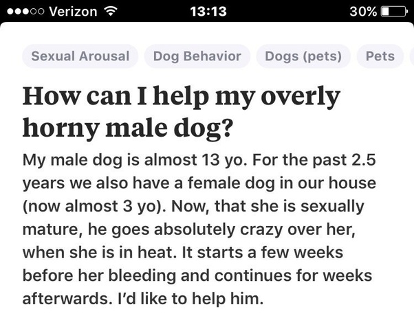 How To Help My Overly Horny Male Dog Quora