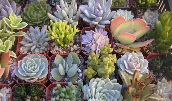 Ver fotos de plantas suculentas 62
