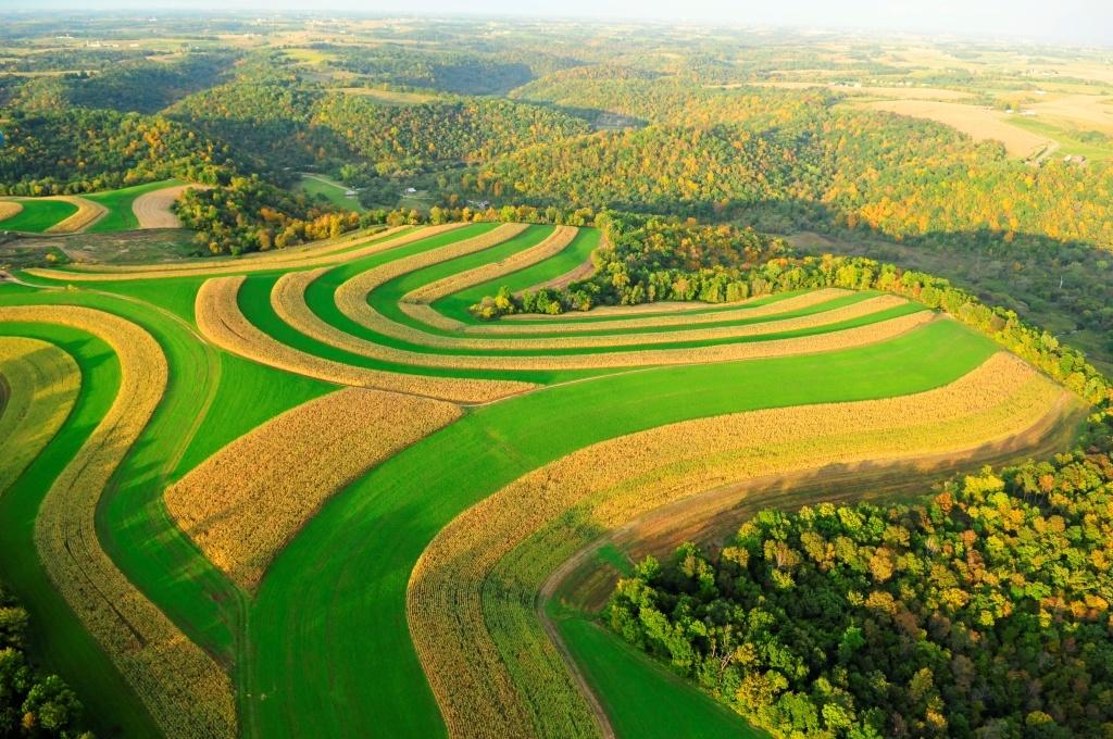 jhoom farming