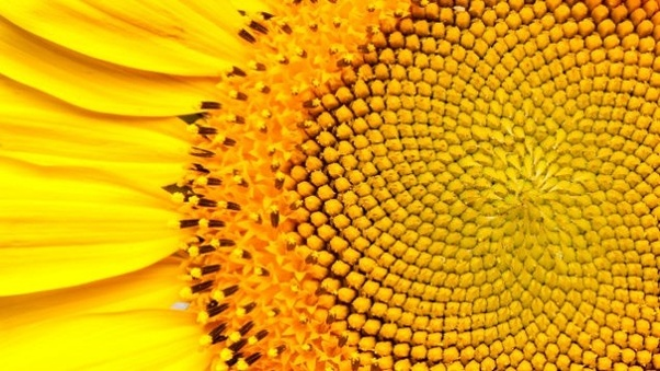 How to use golden ratio in my real life - Quora