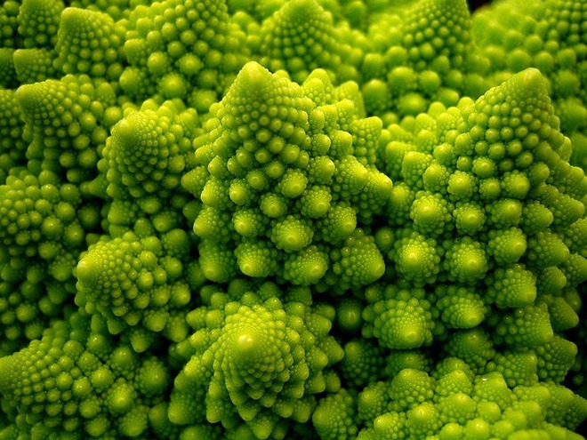 What are some beautiful examples of patterns in nature? - Quora