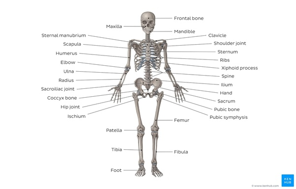 What\'s the best way to study human anatomy? - Quora