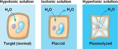 How is the process of plasmolysis in plants carried out ...