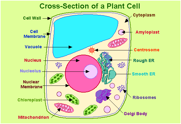 What are important diagrams for class 12 biology board exam