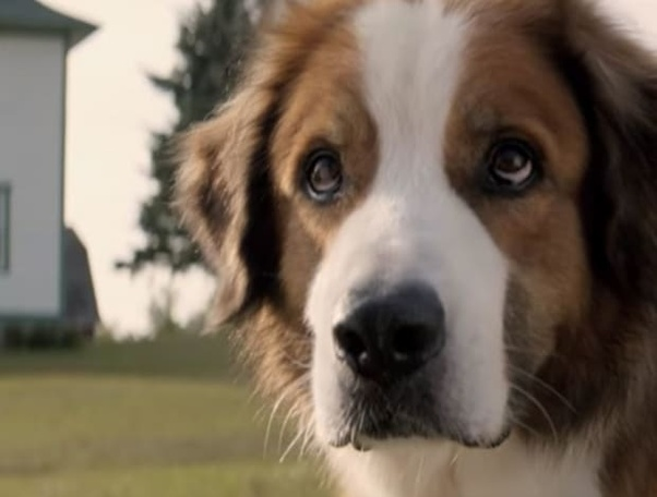 Which Dog Breeds Are Used In A Dog S Purpose Movie