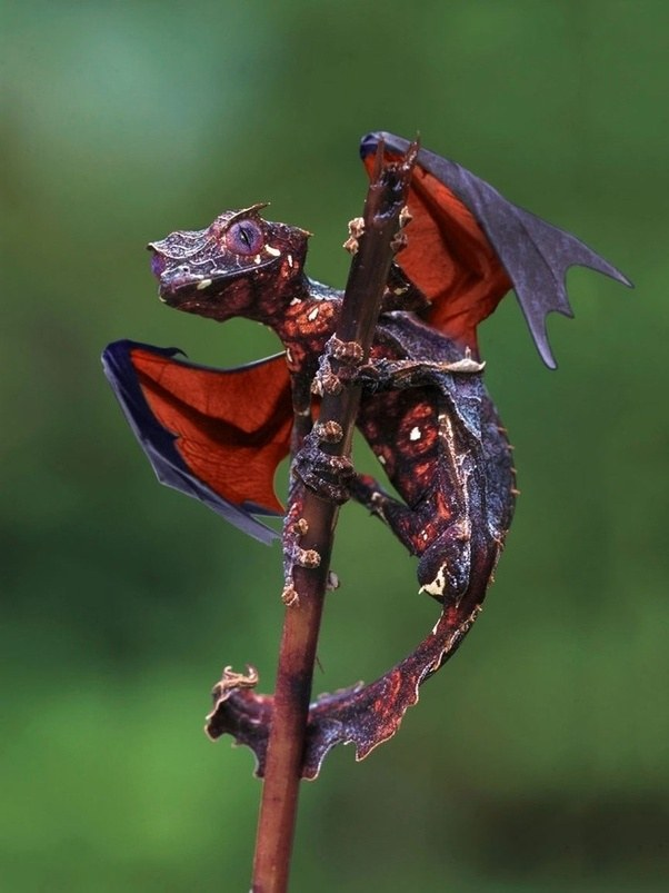 Real Fire Dragon: Can A Dragon Possibly Exist?