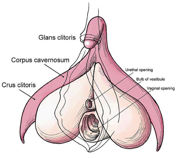 Sexy underwear voyeur