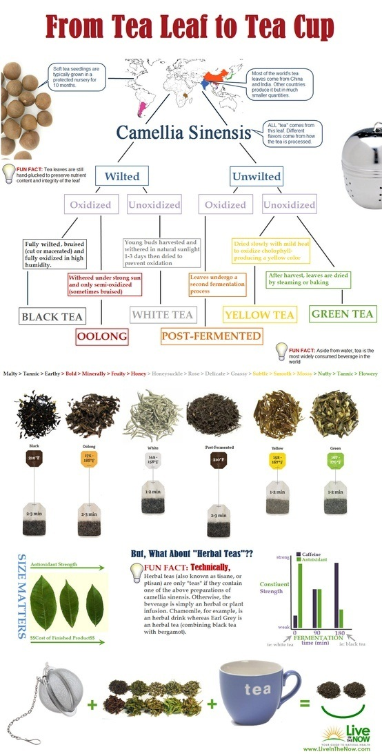 What Is The Process Tea Goes Through From The Plant To Be Ready To