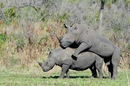 Strichmädchen aus Rhinow
