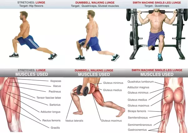 which muscles are used to do lunges quora